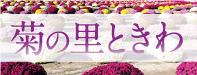 菊の里ときわ